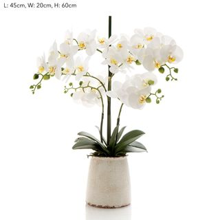 Orchid in Ivory Pot Lge