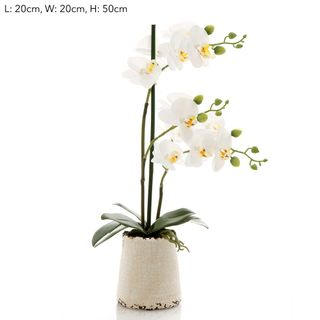 Orchid in Ivory Pot Sm White