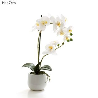 Phal R/Touch Wht Gloss Ceramic Pot M