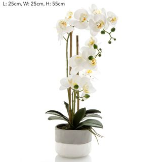Orchid in Grey Pot Lge White