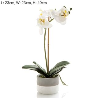Orchid in Grey Pot Sm White