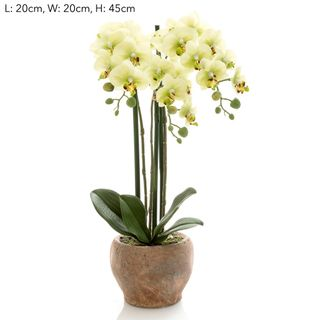 Orchid in Terra Pot Green