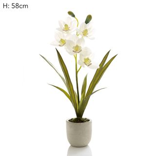 Cymbidium Stem Clay Ivory Pot 55cm
