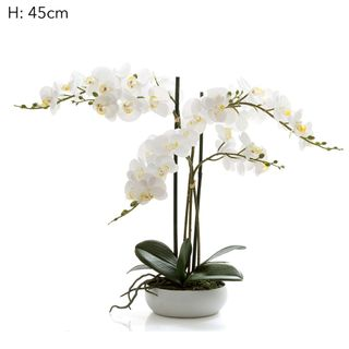 Phal R/Touch in Wht Round Pot 45cm
