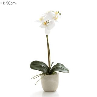 Phal R/Touch in Clay Ivory Pot 50cm