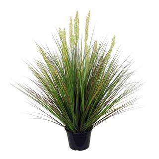 Onion Grass in Pot 90cm