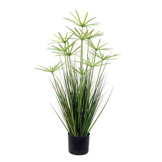 Onion Grass Flower in Pot 90cm