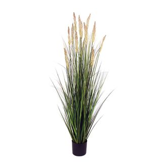 Onion Grass in Pot