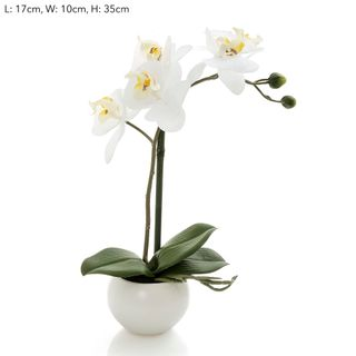 Orchid in Whiite Pot 35cm White