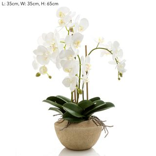 Orchid in Stone Pot Med White