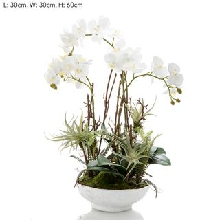 Orchid in White Pot w/Fern