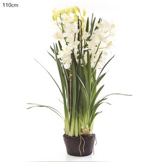 Cymbidium Giant Paper Pot 110cm White