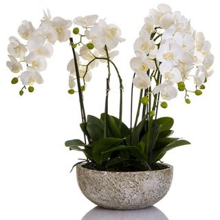 Orchid x 7 in Round Clay Pot White