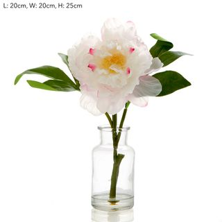 Peony in Glass Vase Lt Pink