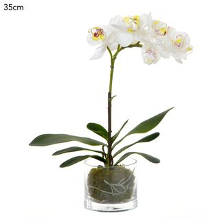 Phal Wht in Round Glass Vase 35cm