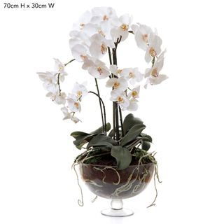 Phalaenopsis x8 in Glass Vase White