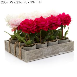 Peony Spray in Pot 12 Pc/Tray