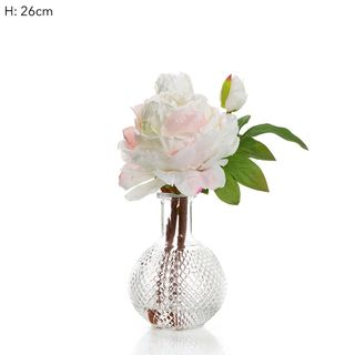 Peony in Glass Vase Pink/White