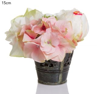 Rose/Hyd in Tin Pot 15cm Pink/Green