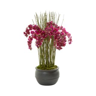 Light Pink Phalaenopsis Orchids in Black Planter