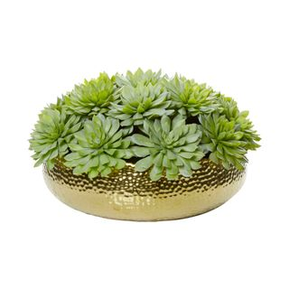 Succulents in  Gold Bowl