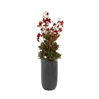 Red Velvet Magnolia in Large Dark Grey Planter