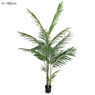 Areca Palm Potted 183cm 593 Lvs