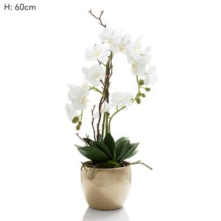 Orchid R/Touch in Ceramic Gold Pot Wht