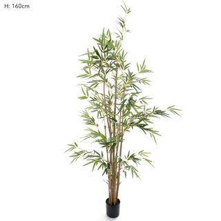Bamboo Tree Natural Trunk 1.6m 823 Lvs