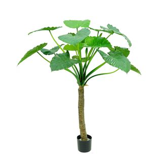 Alocasia Calidora Tree 1.35m