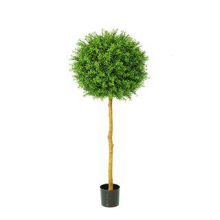 Rosemary Ball Tree 1.45m