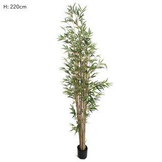 Bamboo Tree Natural Trunk 2.2m 1598 Lvs