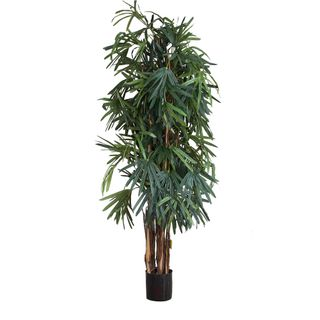 Raphis Palm Thin Leaf 2m