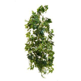 Cissus Bush UV Coated 1.1m
