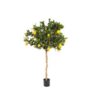 Golden Lemon Tree 90cm