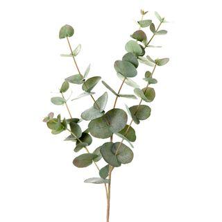 Eucalyptus 86cm