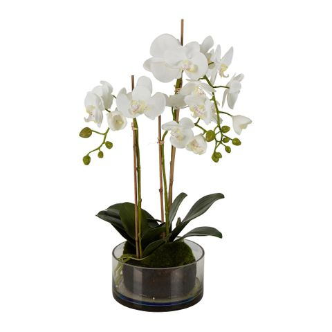 Orchid in Round Glass Vase 60cm White