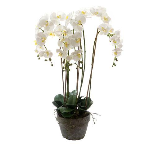Orchid in Terracotta Pot 95cm White