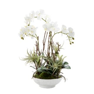 Orchid with Ferns 60cm White