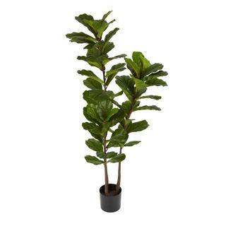 Fiddle Leaf Tree 1.6m