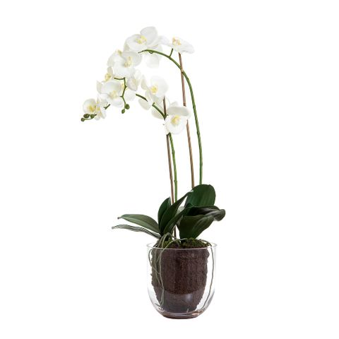 Orchid in Glass Vase 85cm White