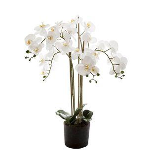 Orchid in Paper Pot Medium 90cm White