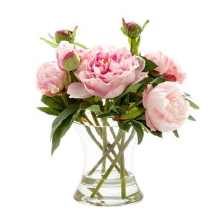 Peony in Water in Glass Vase Dk Pink