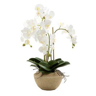 Orchid in Stone Pot Medium 65cm White