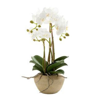 Orchid in Stone Pot Small 50cm White