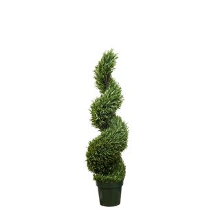 Rosemary Spiral Tree 1.2m
