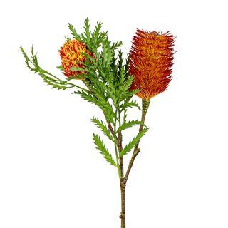 Banksia Spray with Bud & Leaf 80cm Rust