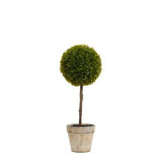 Boxwood Topiary 60cm