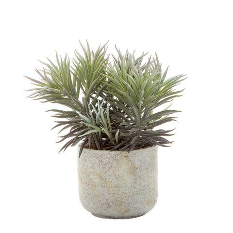 Needle Succulent 23cm