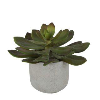 Desert Succulent 20cm